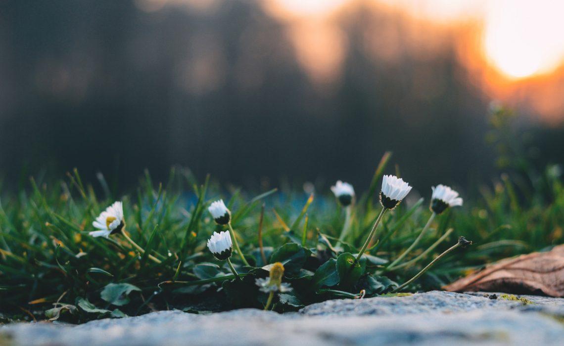 guten-morgen-meditation-starte-entspannt-in-den-tag