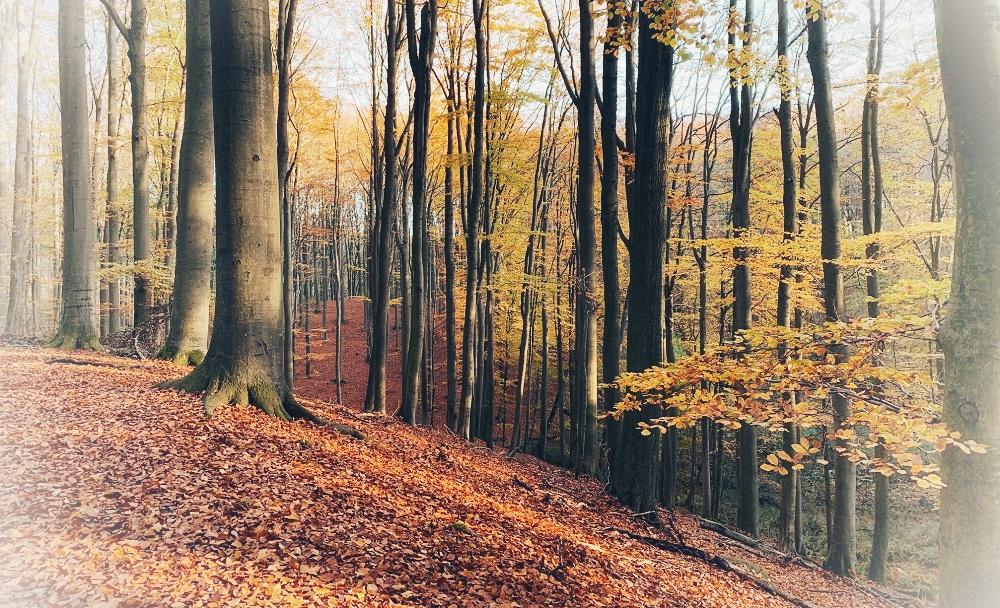 Herbst-Fantasiereise